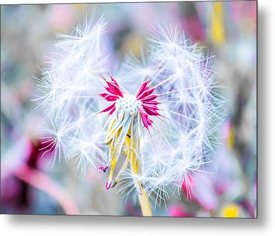 Magic In Pink Metal Print by Parker Cunningham