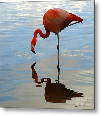 Pink Flamingo   Metal Print by Raymond Earley