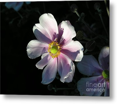 Metal Print featuring the photograph Pink Flower by Bev Conover