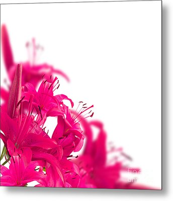 Pink Flower Frames Metal Print by Boon Mee
