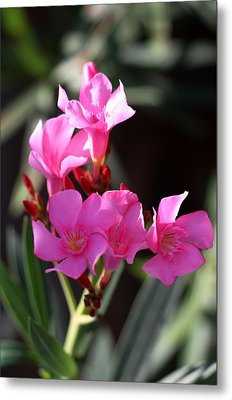 Metal Print featuring the photograph Pink Flower  by Ramabhadran Thirupattur