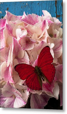 Pink Hydrangea With Red Butterfly Metal Print by Garry Gay