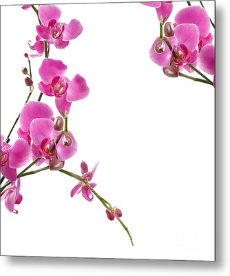 Pink Orchids Metal Print by Boon Mee