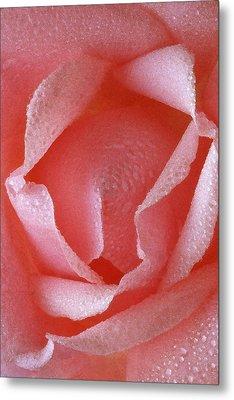 Pink Rose IIi Metal Print