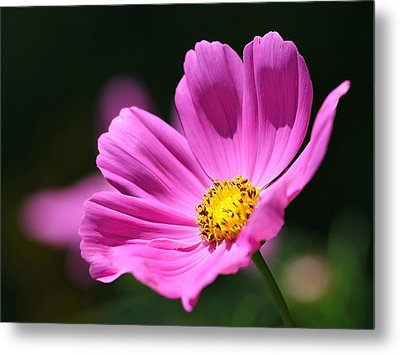 Pink Metal Print by Tracy Male