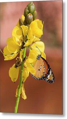 Plain Tiger Butterfly Metal Print
