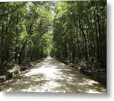 Plantation Road Metal Print