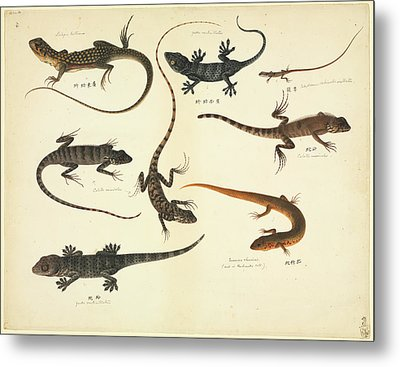 Plate 102: John Reeves Collection Zoology Metal Print by Natural History Museum, London