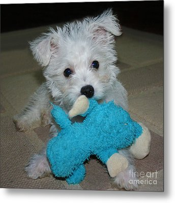 Playful Puppy Metal Print by Terri Waters