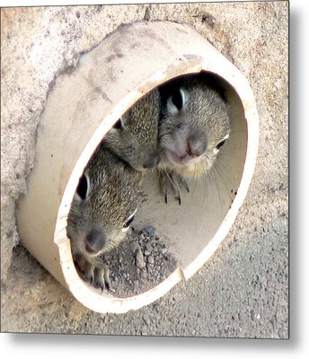 Playing In A Pipe Metal Print by Laurel Powell