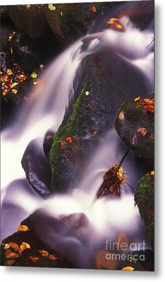 Poetry In Motion - 290 Metal Print by Paul W Faust -  Impressions of Light