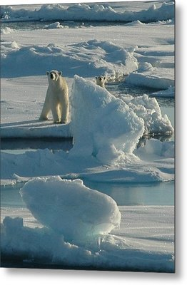 Polar Bear And Cub Metal Print by Kelley Elliott