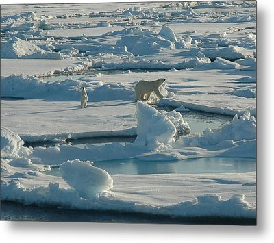 Polar Bear And Her Cub Metal Print by Kelley Elliott