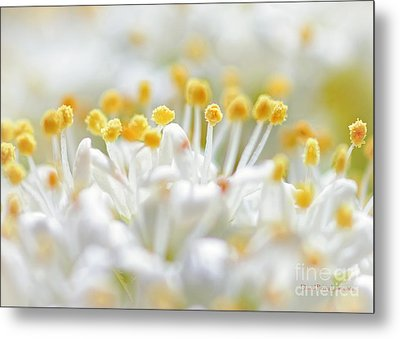 Pollen Metal Print by David Perry Lawrence