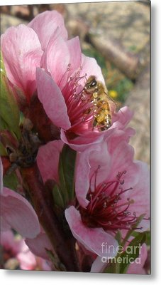 Pollinate Metal Print by Polly Anna