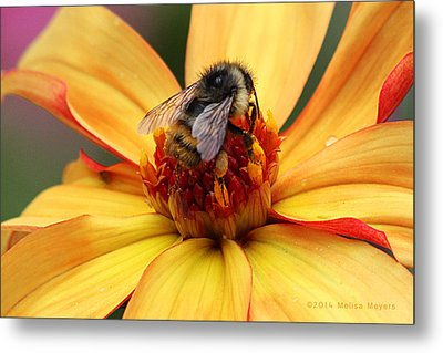 Pollinator  Metal Print by Melisa Meyers