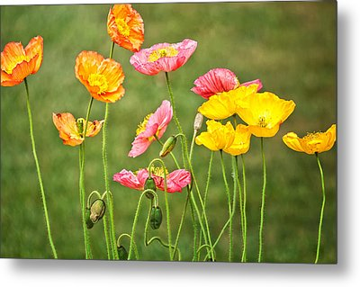 Poppies Blooming Metal Print by Joan Herwig