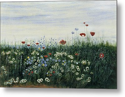 Poppies, Daisies And Other Flowers Metal Print