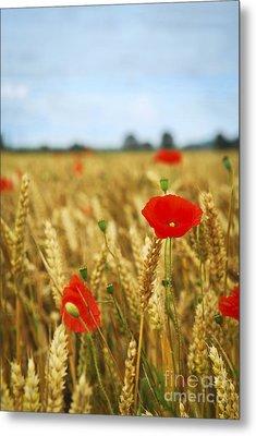 Poppies In Grain Field Metal Print