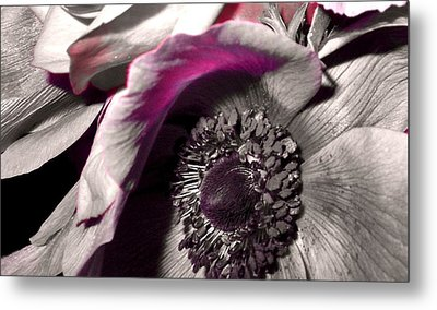 Poppy Eye Metal Print by Sharon Costa