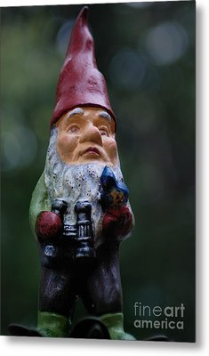 Portrait Of A Garden Gnome Metal Print by Amy Cicconi