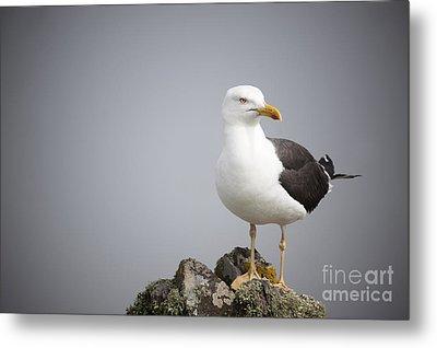 Posed Gull Metal Print by Anne Gilbert