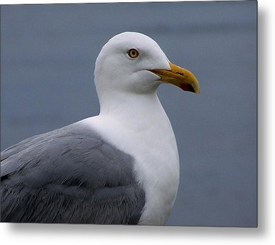 Metal Print featuring the photograph Posing Gull by Gene Cyr