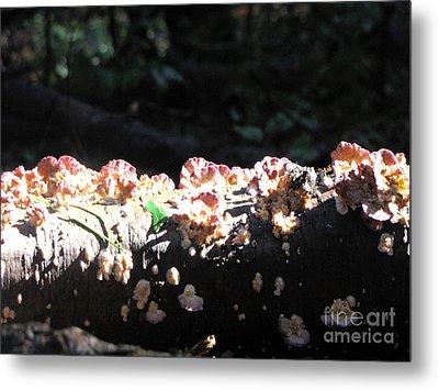 Pretty Fungus Metal Print by Melissa Stoudt