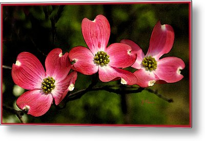 Pretty In Pink Metal Print by James C Thomas