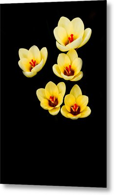 Promise Metal Print by Rebecca Cozart