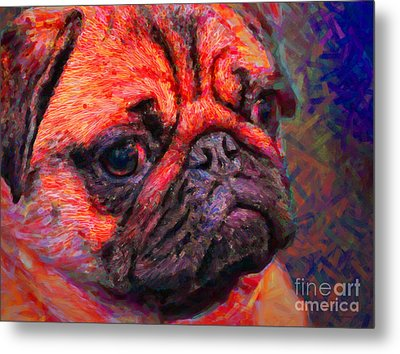 Pug 20130126v2 Metal Print by Wingsdomain Art and Photography