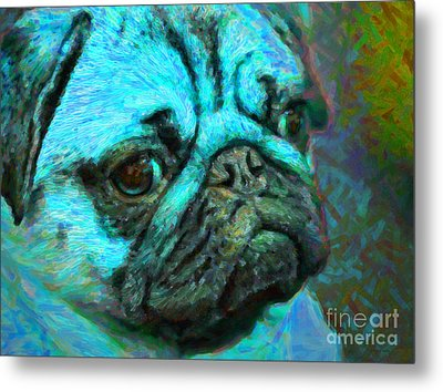 Pug 20130126v5 Metal Print by Wingsdomain Art and Photography