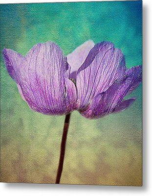 Purple Anemone. Metal Print by Rosanna Zavanaiu