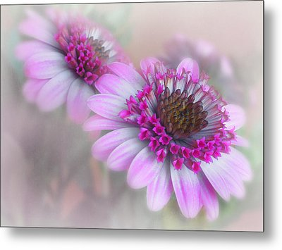 Purple Blooms Metal Print by David and Carol Kelly