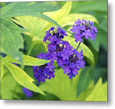 Metal Print featuring the photograph Purple Bunch  by Haleh Mahbod