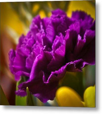 Purple Carnation Metal Print