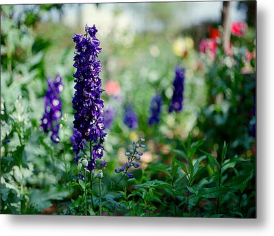 Purple In The Garden Metal Print