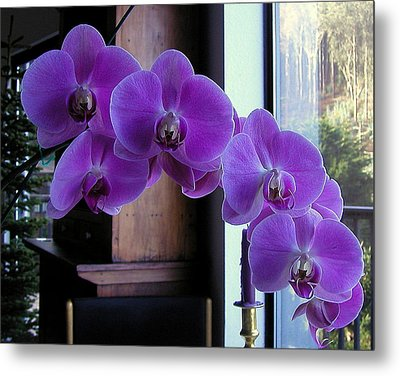 Metal Print featuring the photograph Purple Orchid by AJ  Schibig