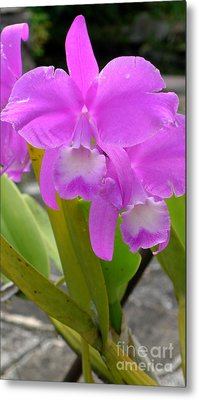 Purple Orchid Metal Print by Mukta Gupta