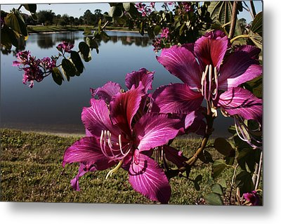 Purple Orchid Tree  Metal Print by Regina  Williams