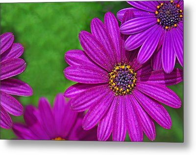 Purple Passion Metal Print by Joan Herwig