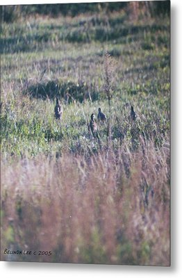 Quail Family On The Run Metal Print by Belinda Lee