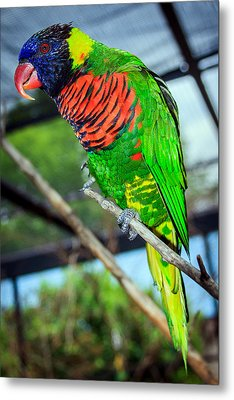 Metal Print featuring the photograph Rainbow Lory by Sennie Pierson