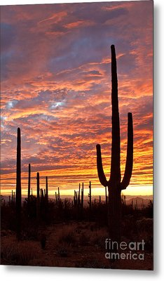 Reaching For The Sky Metal Print by Crush Creations