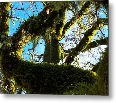 Reaching For The Sky Metal Print by Steve Battle