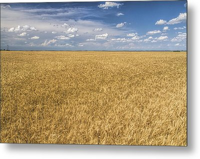 Metal Print featuring the photograph Ready To Harvest by Rob Graham