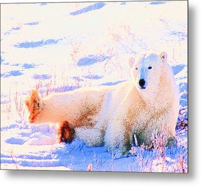 Reclining Polar Bear Metal Print by Alice Ramirez