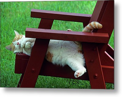 Red And White Tabby Cat Asleep On Chair Metal Print