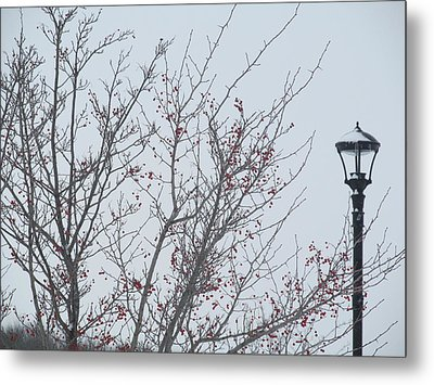 Red Berries And Lamppost Metal Print by Tina M Wenger