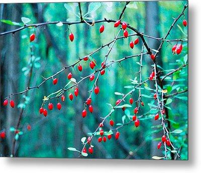Red Berries In October Metal Print